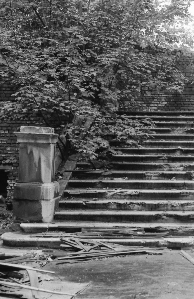 Schwarz-weiß: Eine Treppe im Freien, überwuchert von einem jungen Baum.