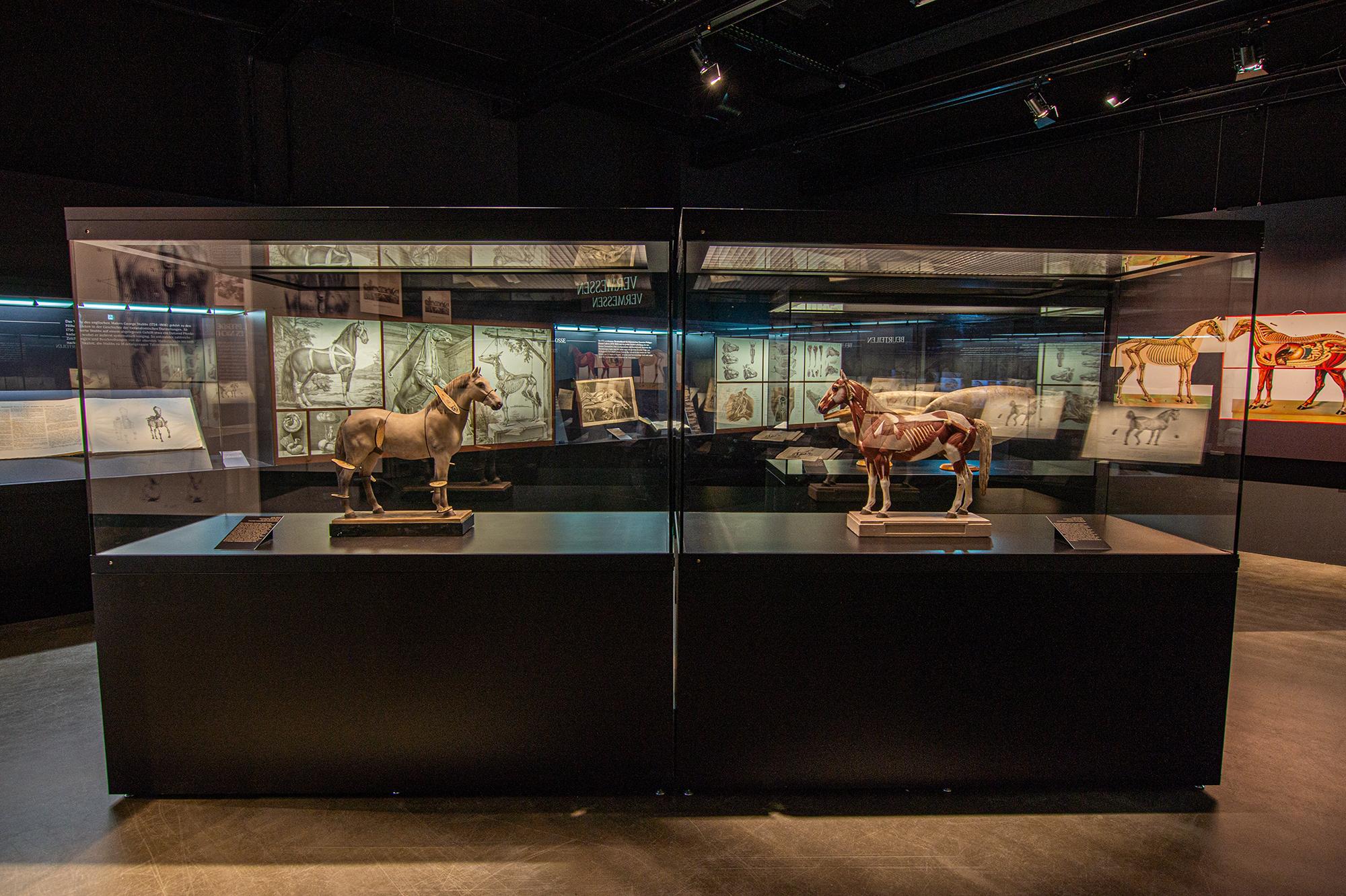 """Zahlreiche Exponate der Ausstellung """"Von der Schönheit und den Leiden der Pferde"""""""
